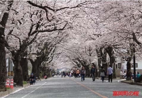 富岡町の桜 平成29年4月14.jpg